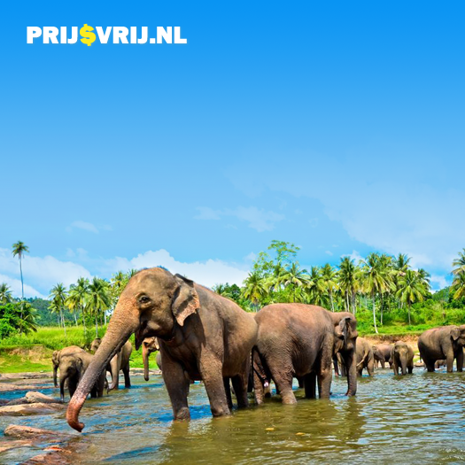Sri Lanka - Goedkope Verre Reizen