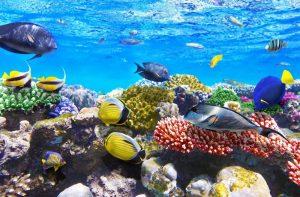 Prachtig huisrif met koraal en gele, blauwe en gestreepte vissen in een kleurrijke onderwaterwereld in Egypte.