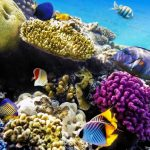 Snorkelen in het mooie Egypte