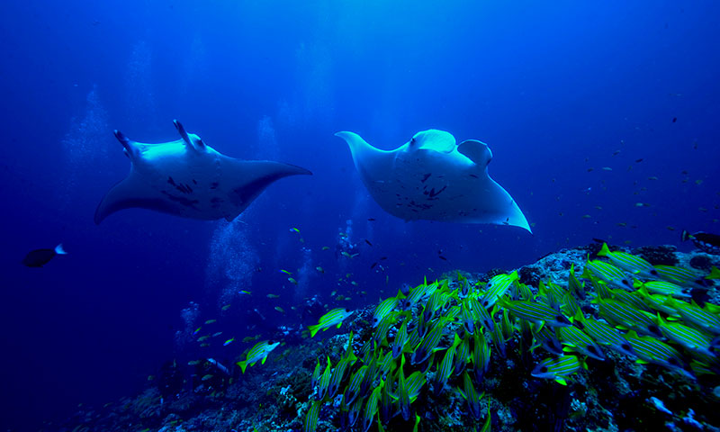 Vakantie Malediven - duiken