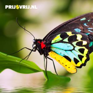 Vlinder in de vlindervallei op Rhodos