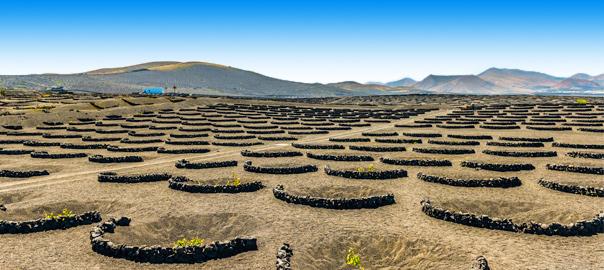 Wijngaarden La Geria Lanzarote