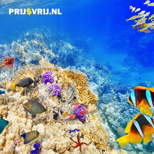 actief in Egypte - de prachtige onderwaterwereld