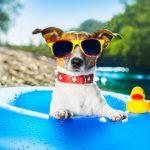 Ik ga op vakantie en ik neem mee…..mijn hond!