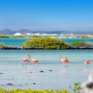 Flamingo's-op-strand-Bonaire