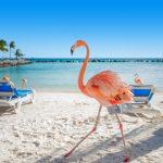 Onze favoriete hotels in Aruba