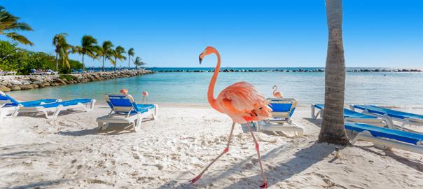 Een flamingo op het strand in Aruba